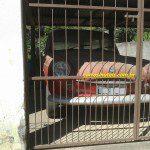 VW Squareback, Bretz, Celina-ES