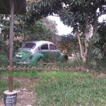 VW Fusca, Alegrete, RS, by Russel